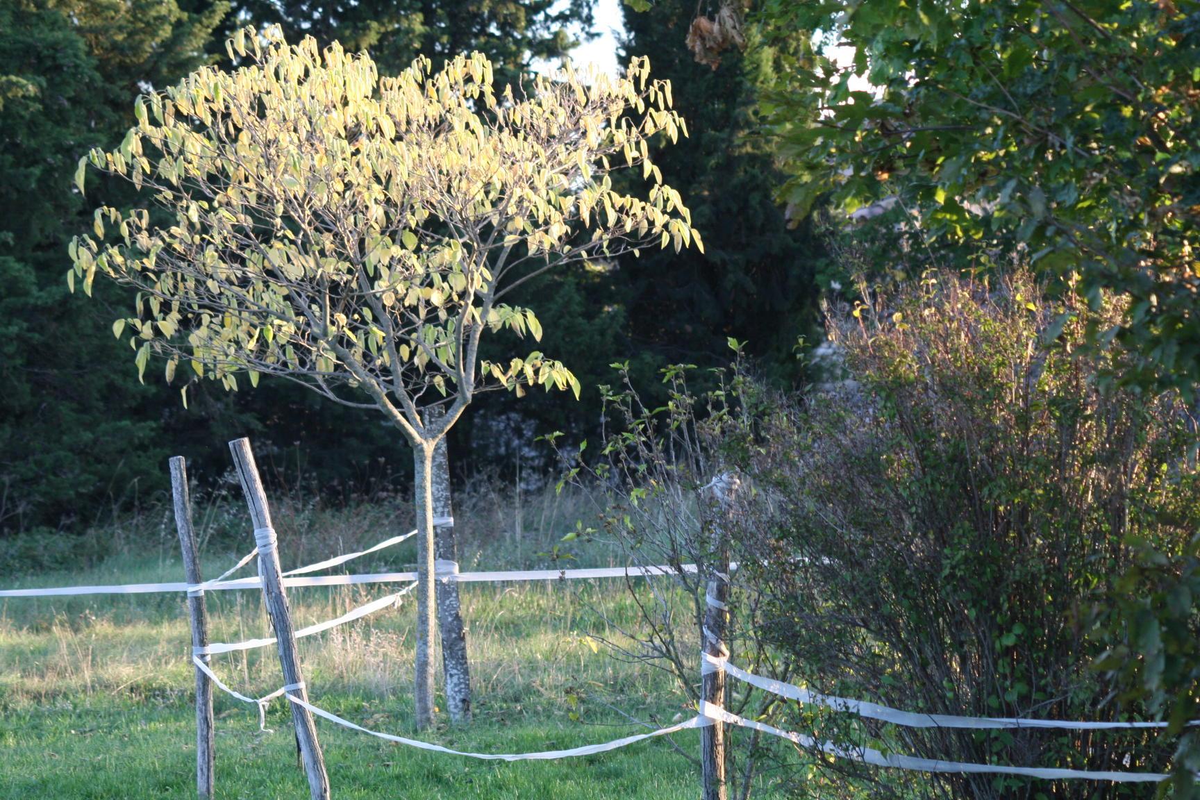 Une lumière sur les arbres du parking du gîte en Ardèche