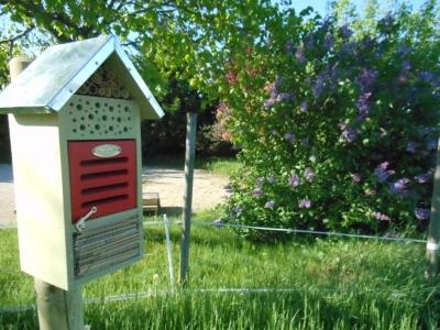 Hôtel à insectes dans le verger de la maison bleue.