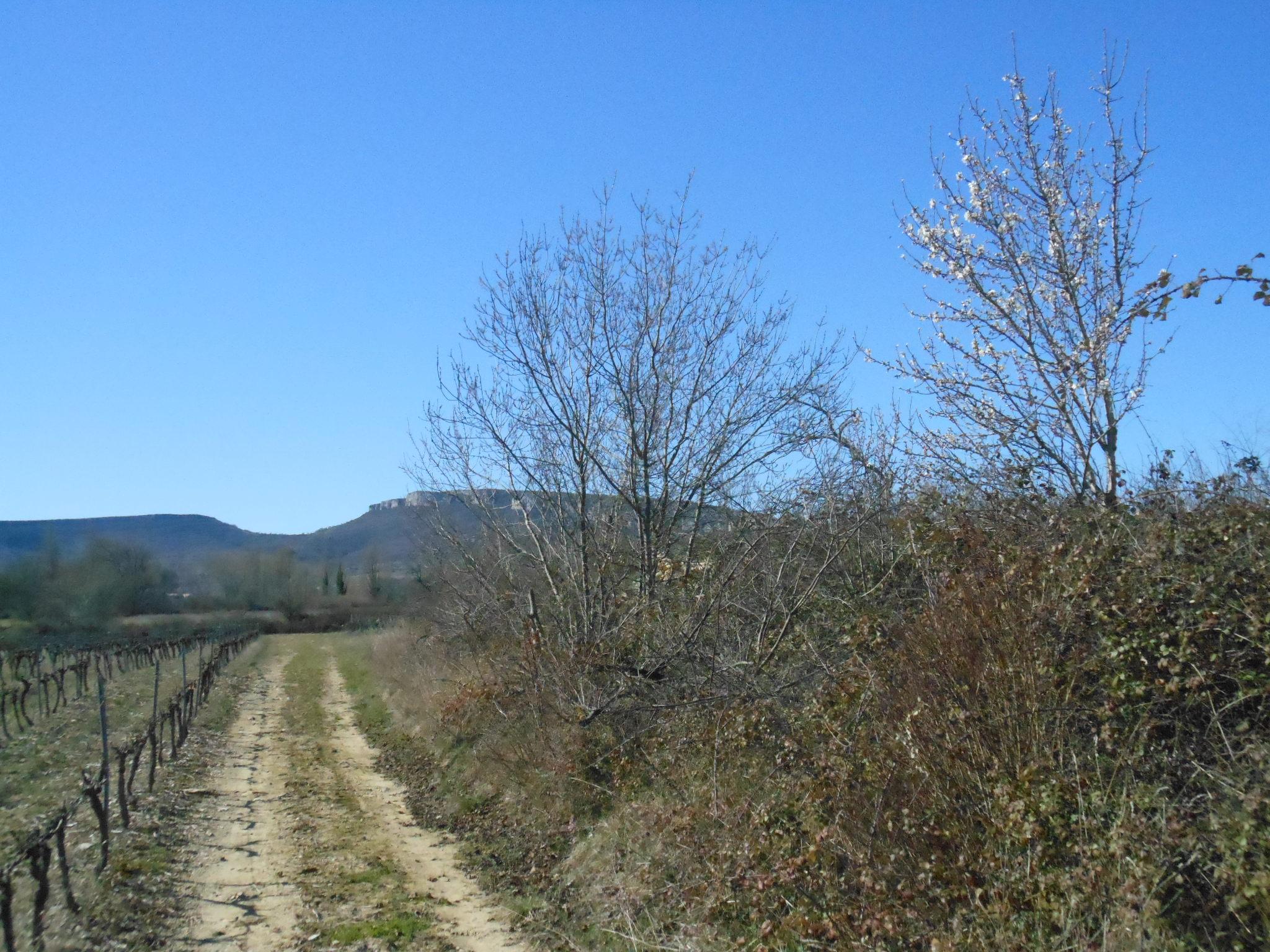 La Dent de Retz en Ardèche sur le plateau des Gras
