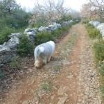 Randonnée sur un chemin de pierres sèches avec son chien